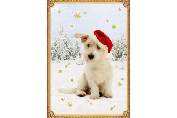 COPPENRAT Adventskalender A3 71579 Vier Pfoten im Schnee
