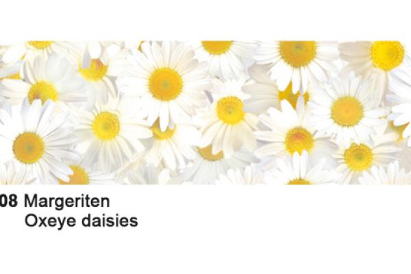 URSUS Karten/Couverts A6/C6 55600008 Gänseblümchen 5 Stück