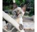 PHOTOGLOB Cats 036200309 d/fr/i/e, 30,5x30,5cm, 2020