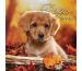 PHOTOGLOB Dogs 036200316 e/d, 30,5x30,5cm, 2020