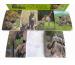 ROOST Notizblock A7 85562 Wildtiere, 6 assortiert