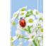 SIMPLEX Simply Harmony 2021 40605.21 148x210mm,Roses,1W/2S