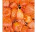 STEWO Servietten Phyllis 33x33cm 257263771 orange 20 Stück